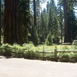 sequoias run